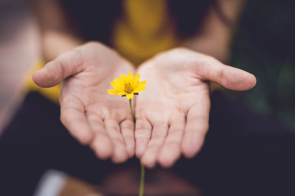 hands open with yellow flower