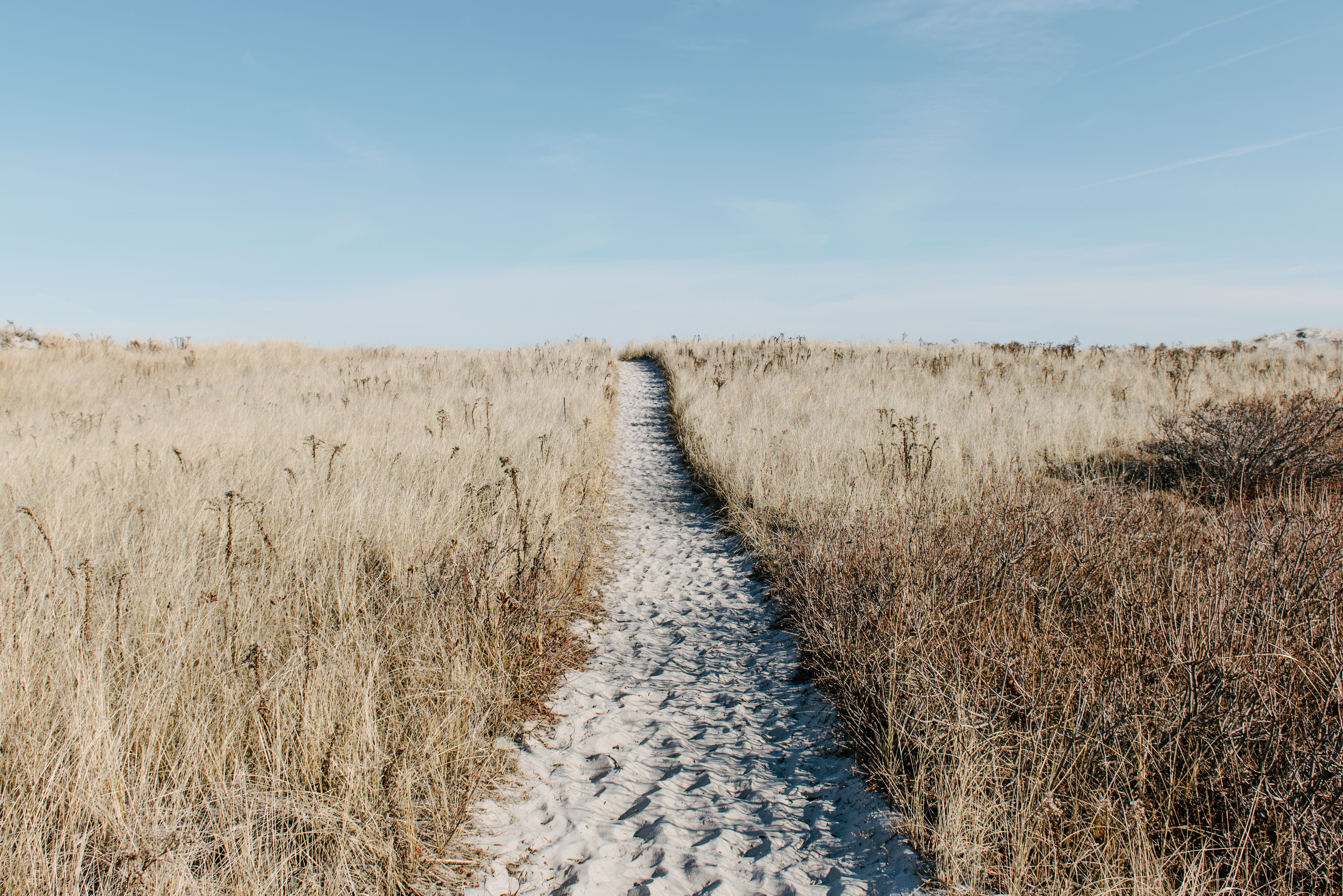 sand covered pathway in tall grass